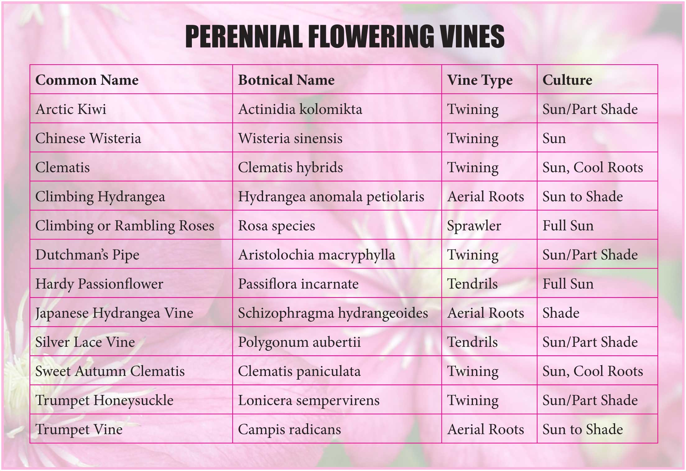 Perennial Flowering Vines Coppolas Garden Center